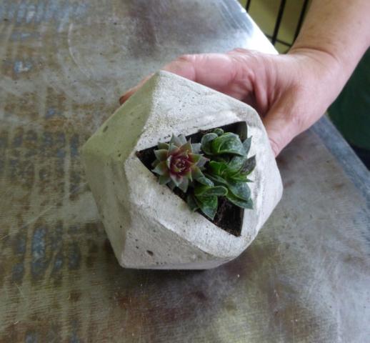 Fertige Ergebnisse mit Pflanzen