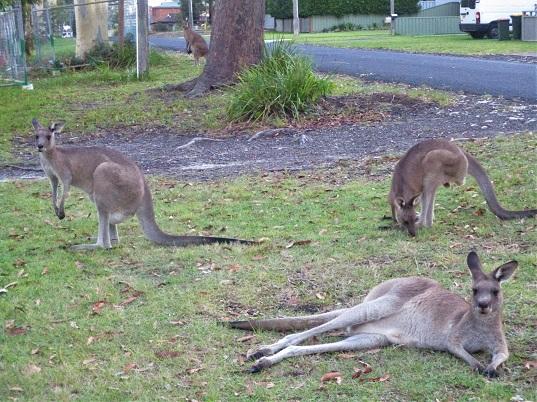 astrid reinke känguruhs dritter fruehling