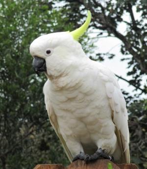 astrid reinke kakadu vorm haus