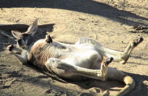 astrid reinke känguruh dritter fruehling
